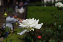 撮る人_旧古河庭園