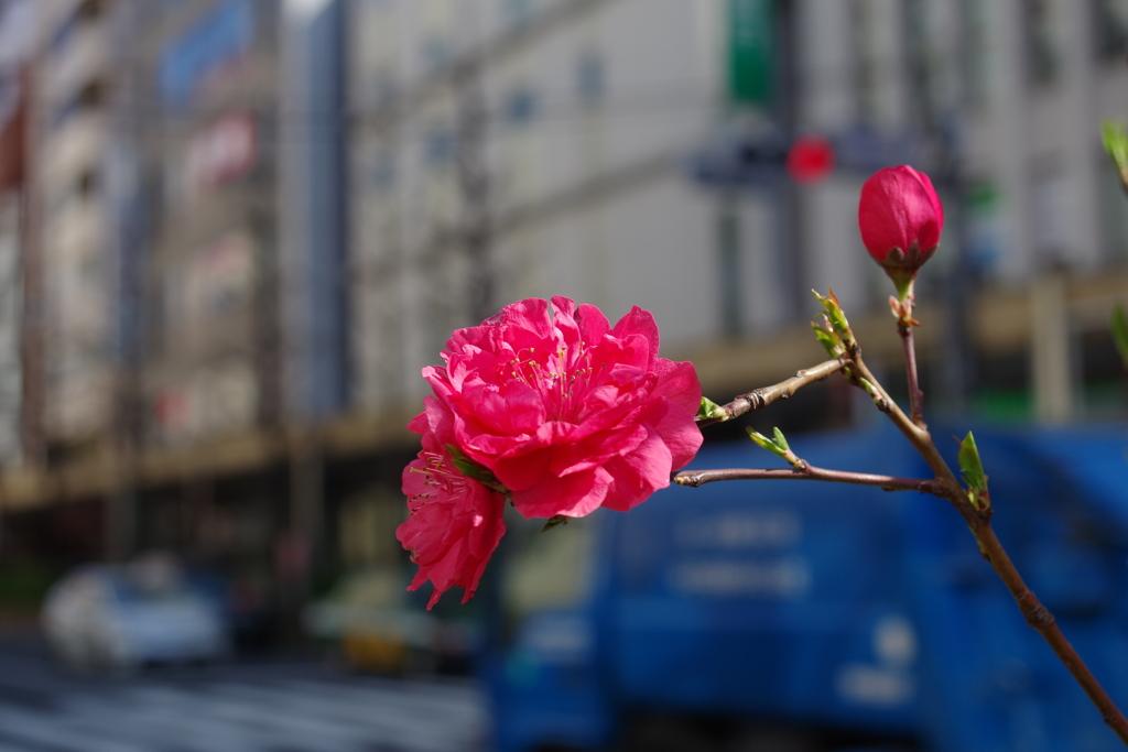 テルテモモ_中野通り