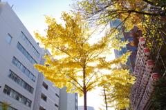黄金色の光_花園神社