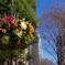 花吊り鉢_新宿中央公園