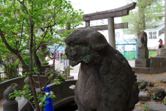狛犬_王子稲荷神社