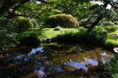 池_小石川植物園