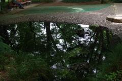 池_下落合野鳥の森公園