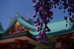 フジ_日枝神社