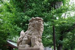 狛犬_亀戸香取神社