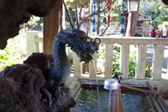 手水舎_龍_白山神社