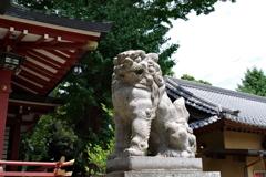狛犬_柴又八幡神社