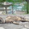 今日も猫日和♪