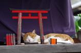 猫神様はお昼ねちぅ。