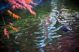 揺れ映る秋