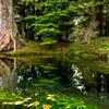 釈迦羅竜王の守護する池