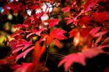 その一葉の秋色