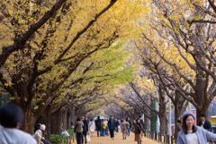 週末の神宮外苑イチョウ並木