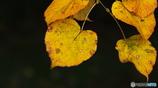 日本の秋の色2 「侘び寂び」