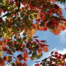 日本の秋の色