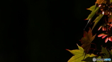 日本の秋の色 黄昏