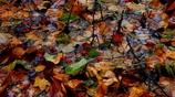 モザイクな秋の景色