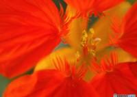OLYMPUS E-PL2で撮影した(紅いピロピロ(調べたけどわからなかった))の写真(画像)