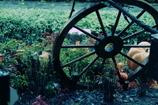 秋の装飾~車輪~