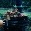秋の装飾~果実~