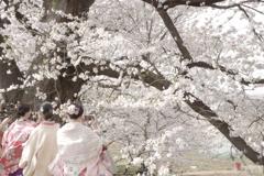桜と友達と思い出