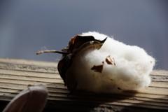綿が見る夢