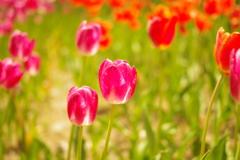 花と光の香り
