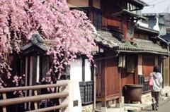 桜と古都風景2