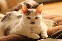 陽だまりの猫あんず(^^♪2