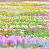 『彩の園』
