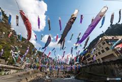 『杖立温泉鯉のぼり祭り』