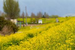 黄色い堤防