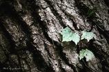 Leaf & Tree