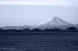 渡良瀬遊水地から望む富士