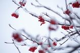 降雪後の街路樹