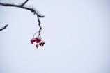 降雪後の街路樹 その3