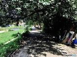 木陰の道。