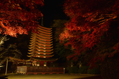 Tanzan Shrine~illumination①
