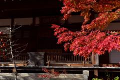 本堂を飾る紅葉