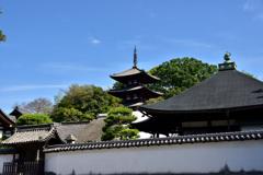 護念院と三重塔(東塔)