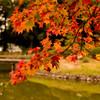 聖天池を飾る紅葉