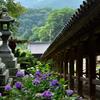 登廊と紫陽花