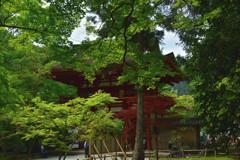 新緑の室生寺 仁王門