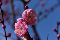 春の足音①