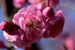 春は近し③