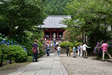 矢田寺 紫陽花と本堂