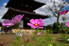 境内に花咲く
