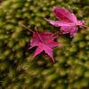 苔と散紅葉