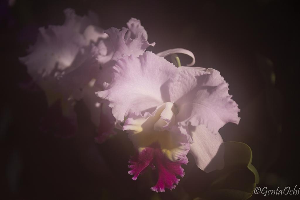 筑波実験植物園 蘭展 2回目