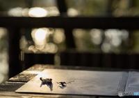 SONY ILCE-7M2で撮影した(秋の木漏れ日)の写真(画像)